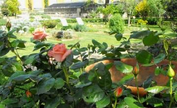 Orto Botanico Florence