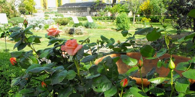 Botanic garden florence or giardino dei semplici what to for Giardino orto botanico firenze