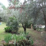 The Private Garden Reserved To The Guests, Nestled Among Olive Trees